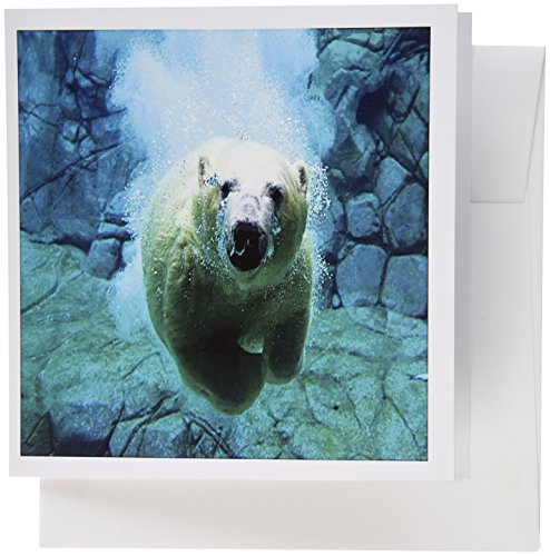 - 3dRose Set of 12 Greeting Cards, Image of A Polar Bear Swimming Underwater (gc_180634_2)