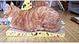 Elisanliving Cat Kitten Corrugated Claws Care Scratcher Board Pad Bed Mat w Free Catnip - But Two 2nd @ Half Price (Pack of One)