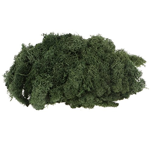 Homyl Natural Preserved Reindeer Forest Moss Lining Dried Craft Flower DIY Micro Landscape Floral Decor Crafts - Grass Green, as described - Preserved Grass