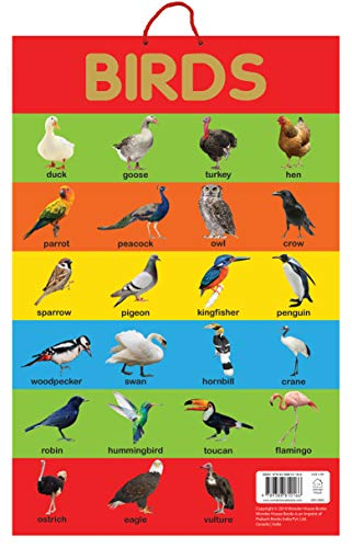 Birds - Early Learning Educational Posters For Children: Perfect For Kindergarten, Nursery and Homeschooling (19 Inches X 29 Inches) (9388810163) Amazon Price History, Amazon Price Tracker