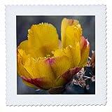 3dRose qs_87912_2 Buckhorn Cholla Cactus Flower, Sonoran Desert Arizona - US03 FZU0011 - Frank Zurey - Quilt Square, 6 by 6-Inch