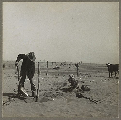1936 Photo Dust bowl farmer raising fence to keep it from being buried under drifting sand. Cimarron County, Oklahoma Location: Cimarron County, Oklahoma (Dust Photography Bowl)