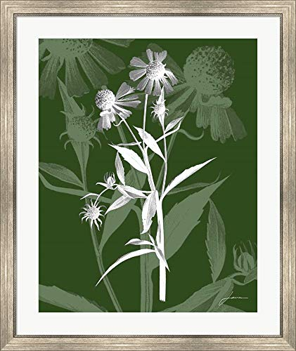 Jewel Stems III by James Burghardt Framed Art Print Wall Picture, Silver Scoop Frame, 32 x 38 ()