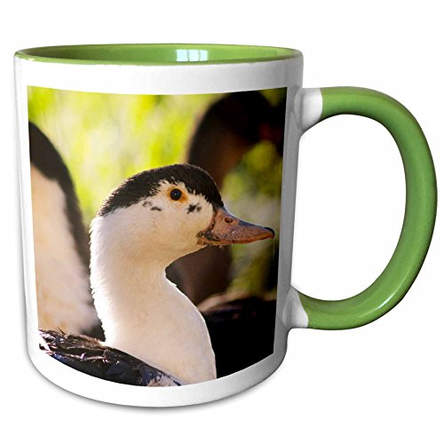 3dRose Danita Delimont - Ducks - Ferme de Biorne duck and fowl farm Dordogne, France - EU09 PKA1167 - Per Karlsson - 11oz Two-Tone Green Mug (Ferme Mug)