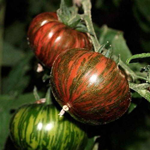 David's Garden Seeds Tomato Slicing Chocolate Stripes SLJ139 (Multi) 50 Heirloom - Stripe Delight