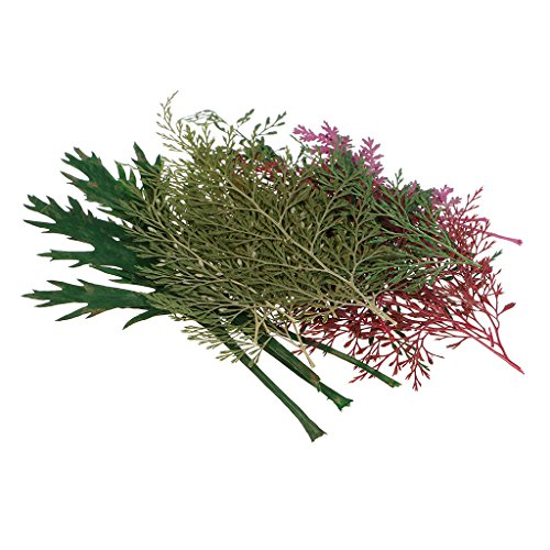 Baoblaze Multiple Natural Dried Flowers, Real Press Annual phlox, Mixed Leaves, Pink Larkspur, Mini Rose, Hydrangea, Daisy, and More Real Pressed Dried Flowers - 24pcs 50-130mm leaves