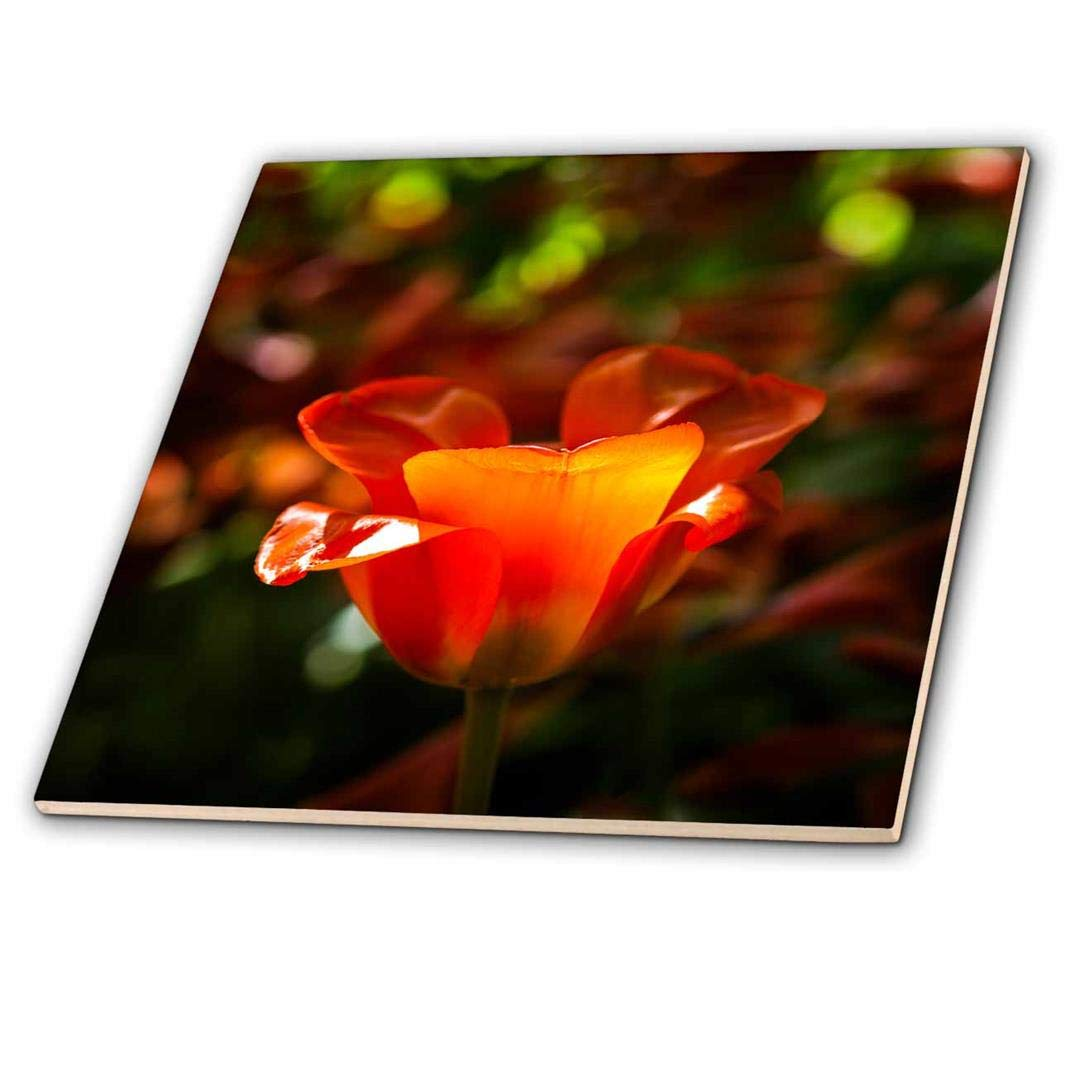 3dRose'Beautiful Sunlit Red Tulip Flower, Play of Light and Shadows Ceramic Tile 12' Play of Light and Shadows Ceramic Tile 12 ct_273937_4