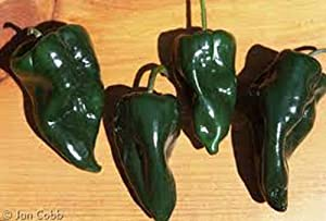 Pepper, Poblano Pepper Seeds, Non GMO, 25 Seeds per Pack, mild Chili Pepper originating in The State of Puebla, Mexico