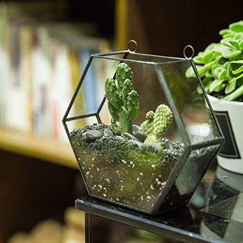 Best Quality - Flower Pots & Planters - Wall Hanging Geometric Glass Terrarium Box Succulents Plants Planter Hexagon Flower Pot Garden Vertical Bonsai Flowerpot Indoor - by MANGO. - 1 PCs