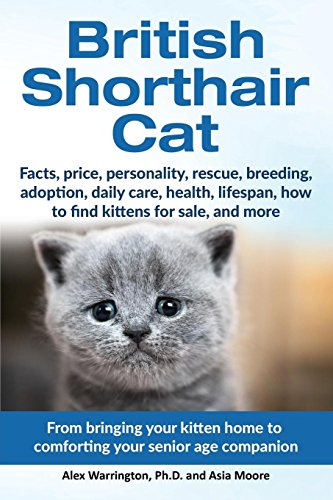 - British Shorthair Cat: From bringing your kitten home to comforting your senior age beloved companion