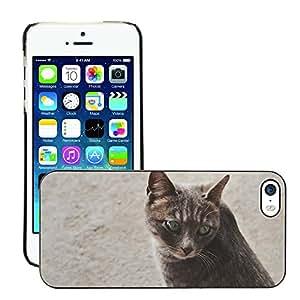 Super Stellar Slim PC Hard Case Cover Skin Armor Shell Protection // M00125891 Cat Kitten Kitty Feline Pet Face // Apple iPhone 5 5S 5G