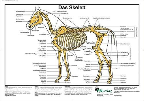 Das Skelett: FN-Lehrtafel (FN-Lehrtafeln): Amazon.de: Deutsche ...