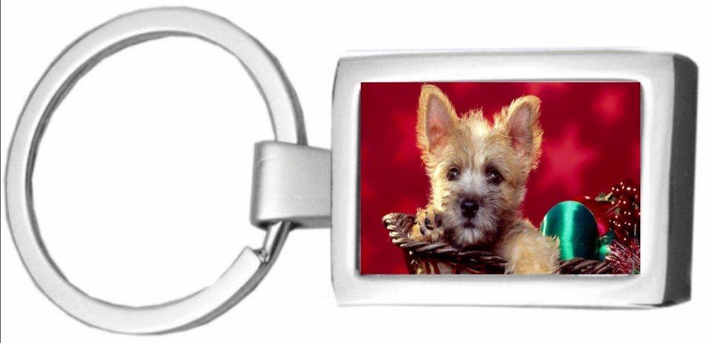Cairn Terrier perro (Golden) cromo llavero en caja de regalo ...