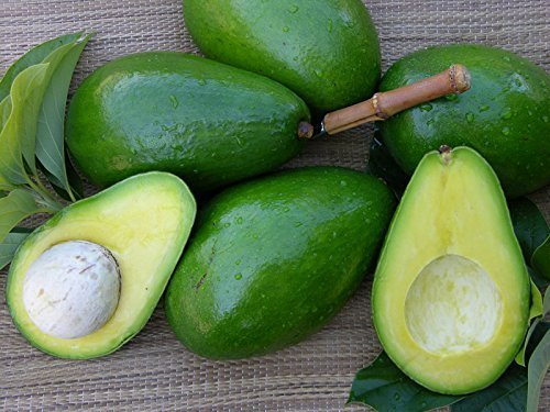 Avocado - Sunset Groves - Farm to Table - Picked Fresh - 4 Count