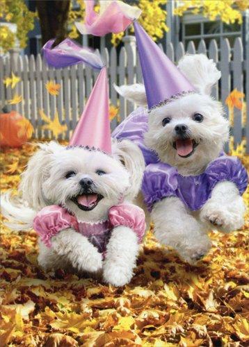 Princess Dogs Trick Or Treating - Avanti Funny Halloween (Happy Halloween Funny Pets)