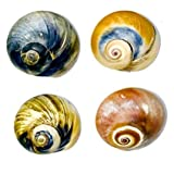 Hermit Crab Shells - 4 Pack - Medium - NATURALLY SCENTED FROM MARINE LIFE WILD HABITAT IS GUARANTEED TO ATTRACT FISH AND AQUATIC PETS TO SHELLS