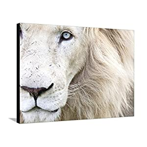 Canvas Print Wall Art 'Full Frame Close Up Portrait of a Male White Lion with Blue Eyes. South Africa.' by Karine Aigner, 30x40 in
