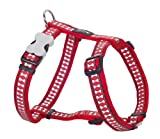 Red Dingo Reflective Safety Dog Harness, Medium, Red, My Pet Supplies
