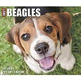 Just Beagles 2018 Daily Desk Boxed Calendar