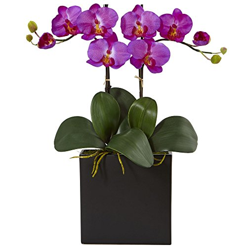 Double Phalaenopsis Silk Orchid - Nearly Natural Double Mini Phalaenopsis Silk Orchid in Black Vase,
