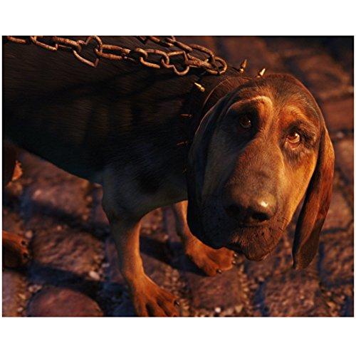 Alice in Wonderland Bayard the bloodhound 8 x 10 Inch ()