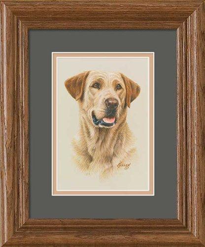 Yellow Lab Portrait GNA Mini Framed Print by Jim Killen