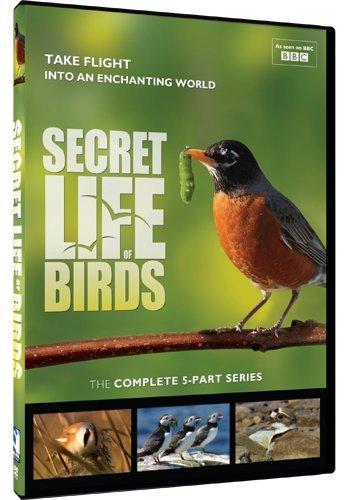 Secret Life of Birds - 5 Part (Wildlife Natures Bird)