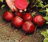 SEED TAPE - BEETROOT Beta Vulgaris 5 METERS 110 seeds Vegetable GARDEN easy saw