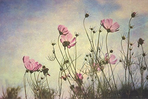 Cosmos Flowers Reaching for the Sun - Fine Art Print - Flower Photography - Nature - Botanical -Summer Flowers and (Cosmo Cottage)