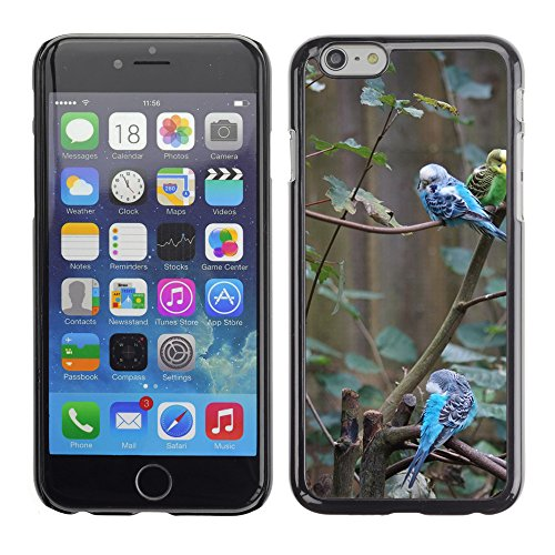 "Bild Hart Handy Schwarz Schutz Case Cover Schale Etui // M00134654 Wellensittiche Kanarien Vögel // Apple iPhone 6 PLUS 5.5"""