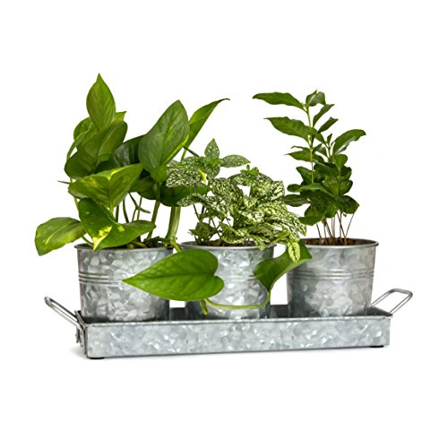 Farmhouse Flower Pot and Tray Set By Walford Home - Vintage Galvanized Windowsill Planter - Rustic Multi-use Caddy Indoor or Outdoor - Kitchen Craft Caddy Succulent Herb Planter - Windowsill Herb