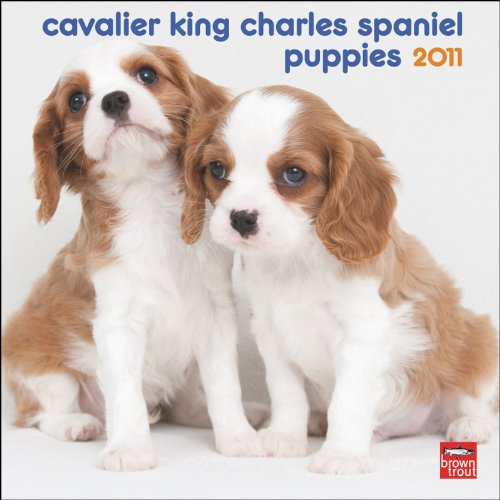 Cavalier King Charles Spaniel Puppies 2011 Mini