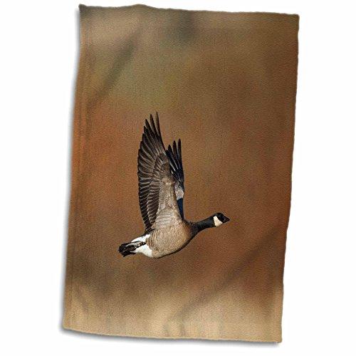 - 3dRose USA, Oregon, Baskett Slough Nwr, Pair of Canada Geese in Flight. Towel, 15