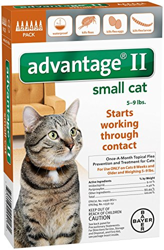 advantage ii cats small - 4