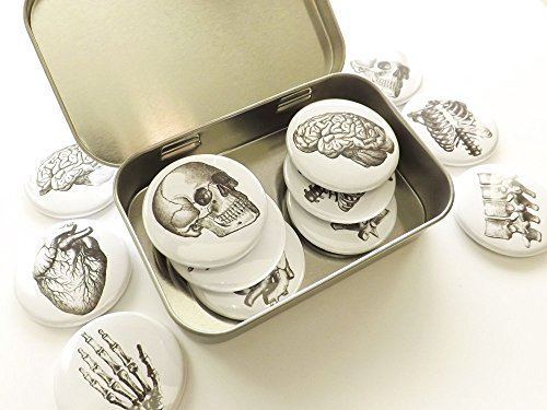 Anatomy 1.5 inch Magnet with tin Gift Set skull brain anatomical heart geekery goth doctor ()