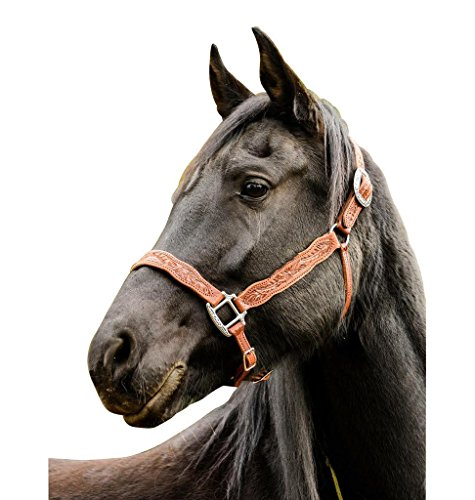 Buckaroo Leather Products A Wild Rose Halter – Arab/Yearling