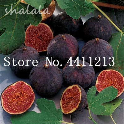 (20 pcs Sweet Honey fig Seeds Fragrant King figs Courtyard ficus, fig Tree, figs Organic Fruits and Vegetables DIY Home garden1 )