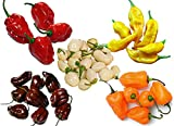 Please Read! This is A Mix!!! 30+ Habanero Hot Pepper Seeds Mix ORGANICALLY Grown Heirloom Non-GMO 5 Varieties: Chocolate. Lemon, White, Red and Orange, Chili, Congo Black, Productive, from USA
