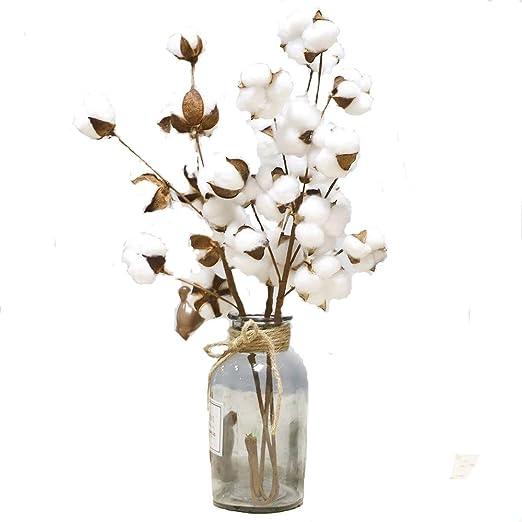 Sencillo Vida Flores Secas Tallos de Algodón Flores Artificiales ...