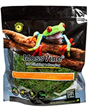 Galapagos 05266 Mossvine, Real Moss Vine, Natural, 6FT