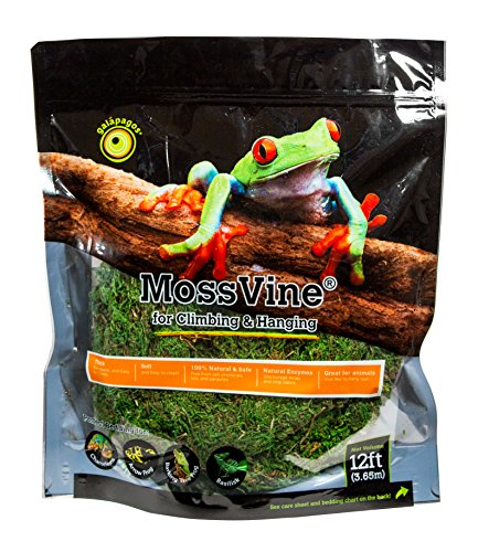 Galpagos (05266) MossVine, Real Moss Vine, Natural, 12FT