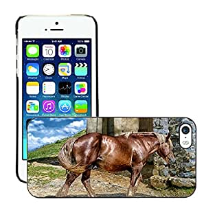 Hot Style Cell Phone PC Hard Case Cover // M00113198 Horse Animal Large Beautiful Outside // Apple iPhone 5 5S 5G