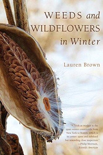 Weeds and Wildflowers in (Lauren Brown)