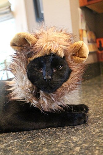 Lion Mane Dog Cat Costume and Complimentary Feathered Catnip Toy - Dog and Cat Costumes by Pet Krewe