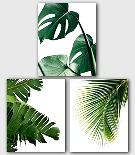 Monstera, Banana, Palm Leaf Prints, Set Of 3, Tropical Palm Leaves, 8 x 10 Inches, Unframed ()