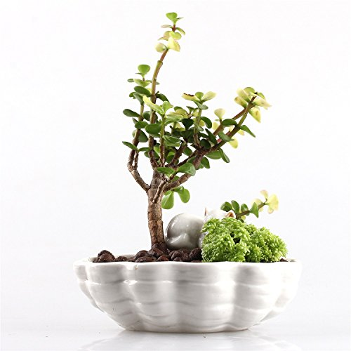 Cute White Cat Kitten Lying on a Shell Small Size Coloured Porcelain Ceramic Flower Pot Planter for Cacti Succulents Ferns Mos 6.1 X 5 X 3.3 inches Plants not - Cats Faced Round