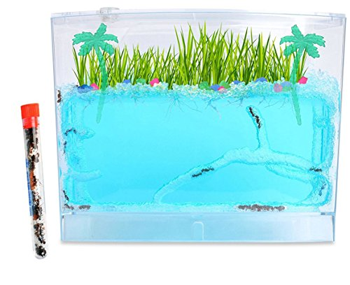 Live Ecosystem Ant Habitat Shipped with 25 Live Ants Now (1 Tube of Ants) by Nature Gift Store