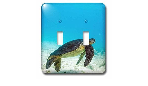 kc/_228792/_1 Green Sea Turtle Underwater Galapagos National Park 3dRose Ecuador 2.25 x 2.25 - Key Chains Set of 2