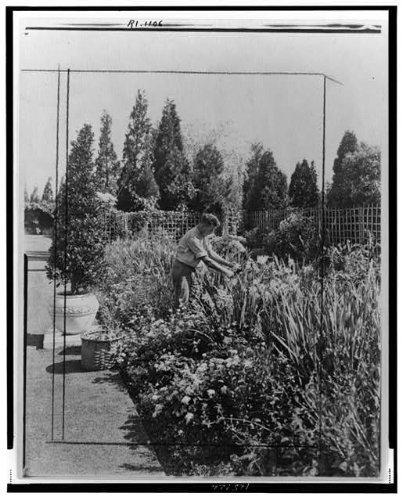 1917 Photo Gardener tending floral border, posed to illustrate Rudyard Kipling's poem The Glory of the Garden Location: Newport, Rhode Island