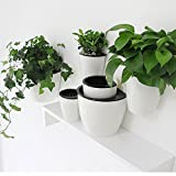 3pc Pack Creative Self Watering Wall Planter,Hanging Flower Pot,5-color & 3-size Plants Holder